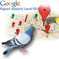 Google Pigeon - Agence web Marseille